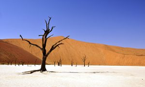 Word of the Week Drought