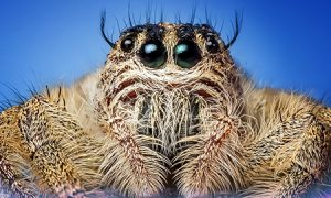 horrible hairy spider