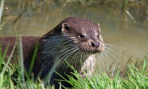 otter word of the week