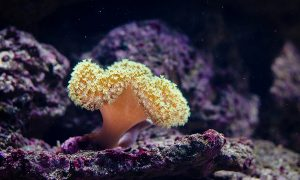 a sea sponge