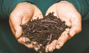 A handful of worms
